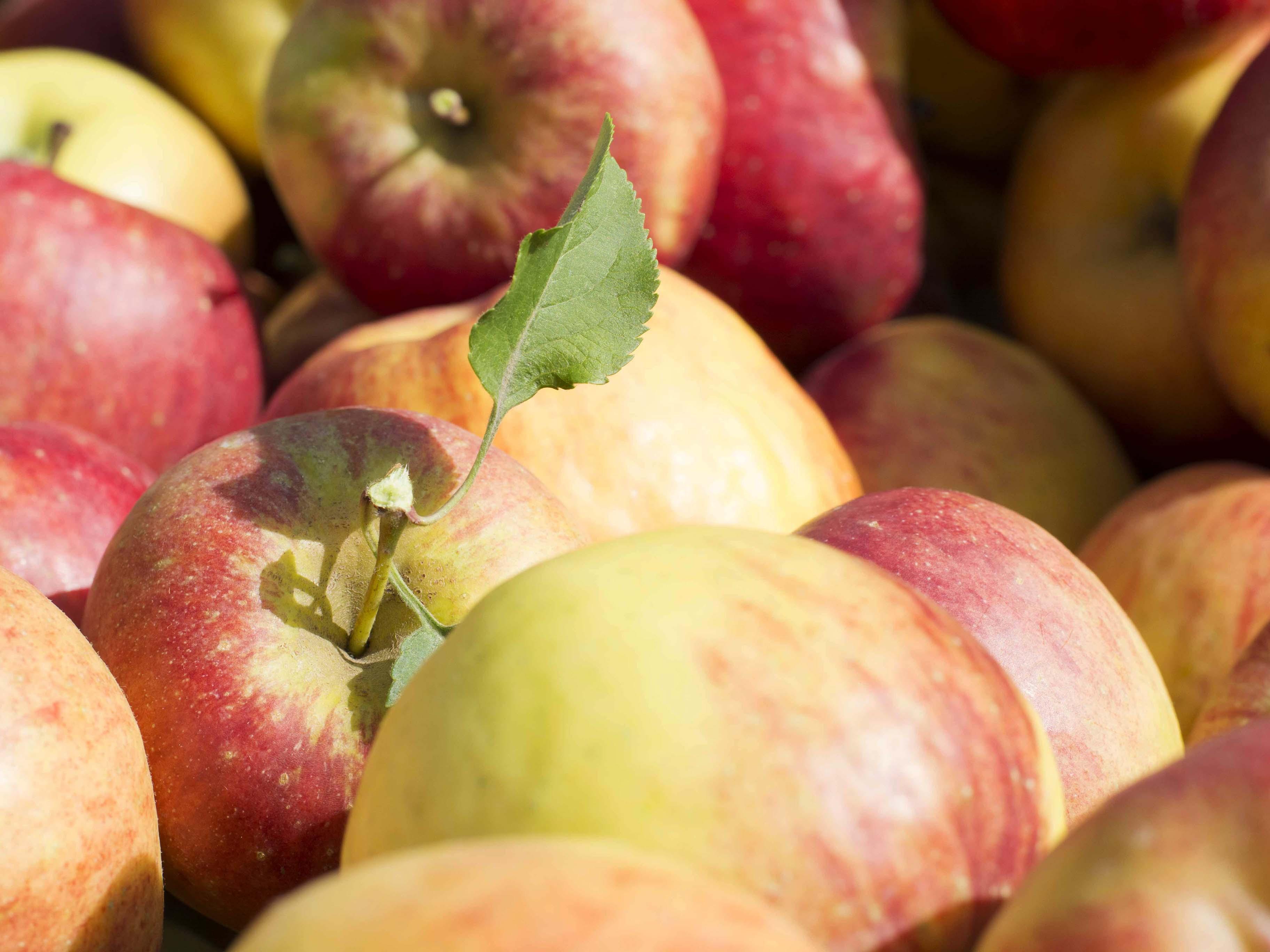 Appelhof Apfelkiste