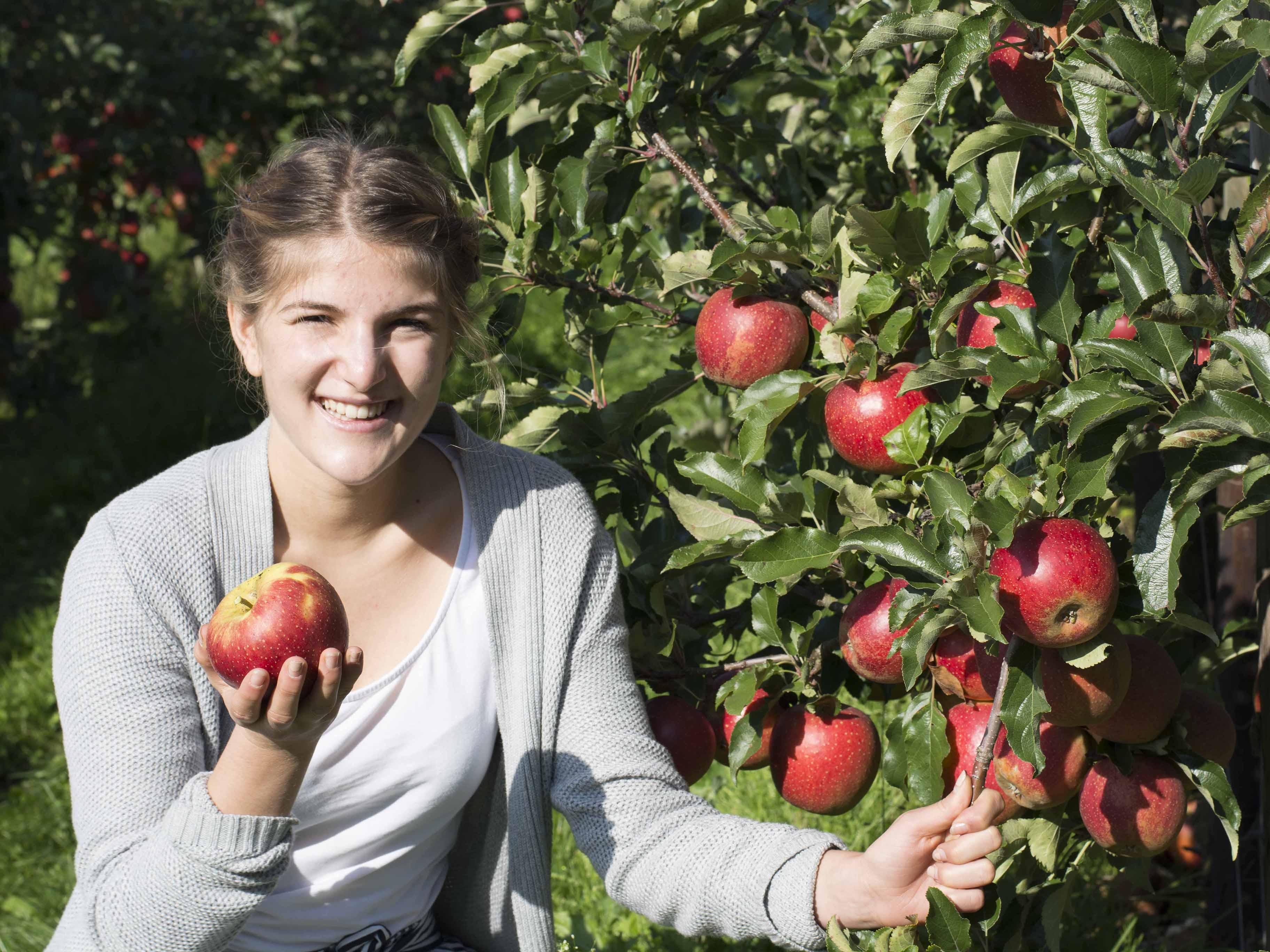 Apfelverkostung auf dem Appelhof