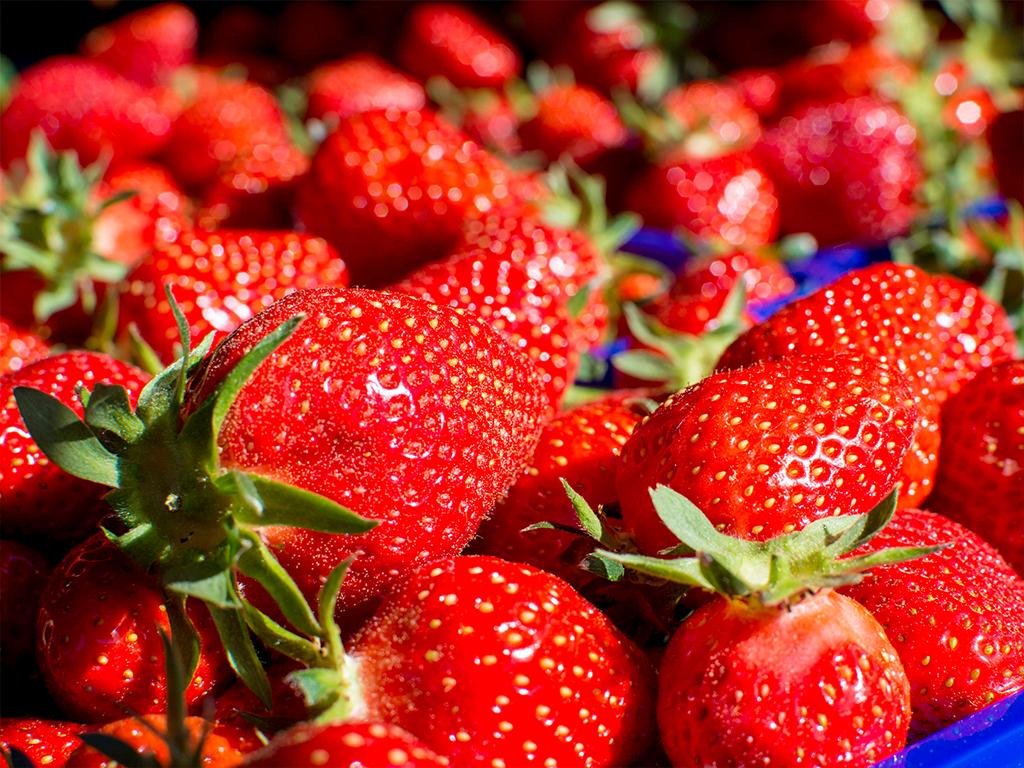 Appelhof | Erdbeekuchen | Erdbeere