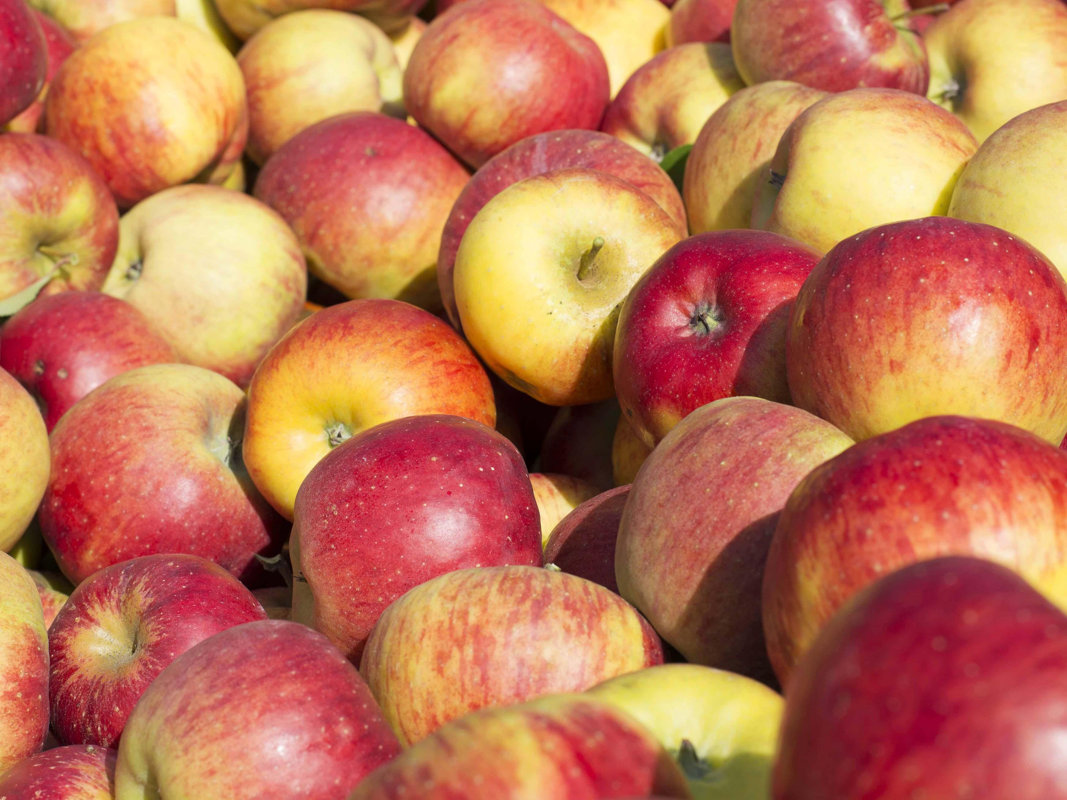 Appelhof_Äpfel