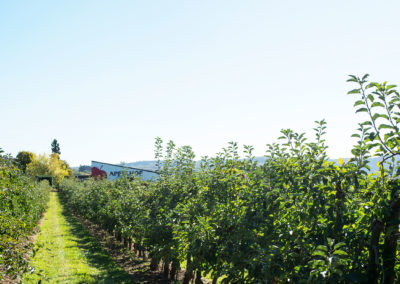 Obstplantage  Appelhof Windeck